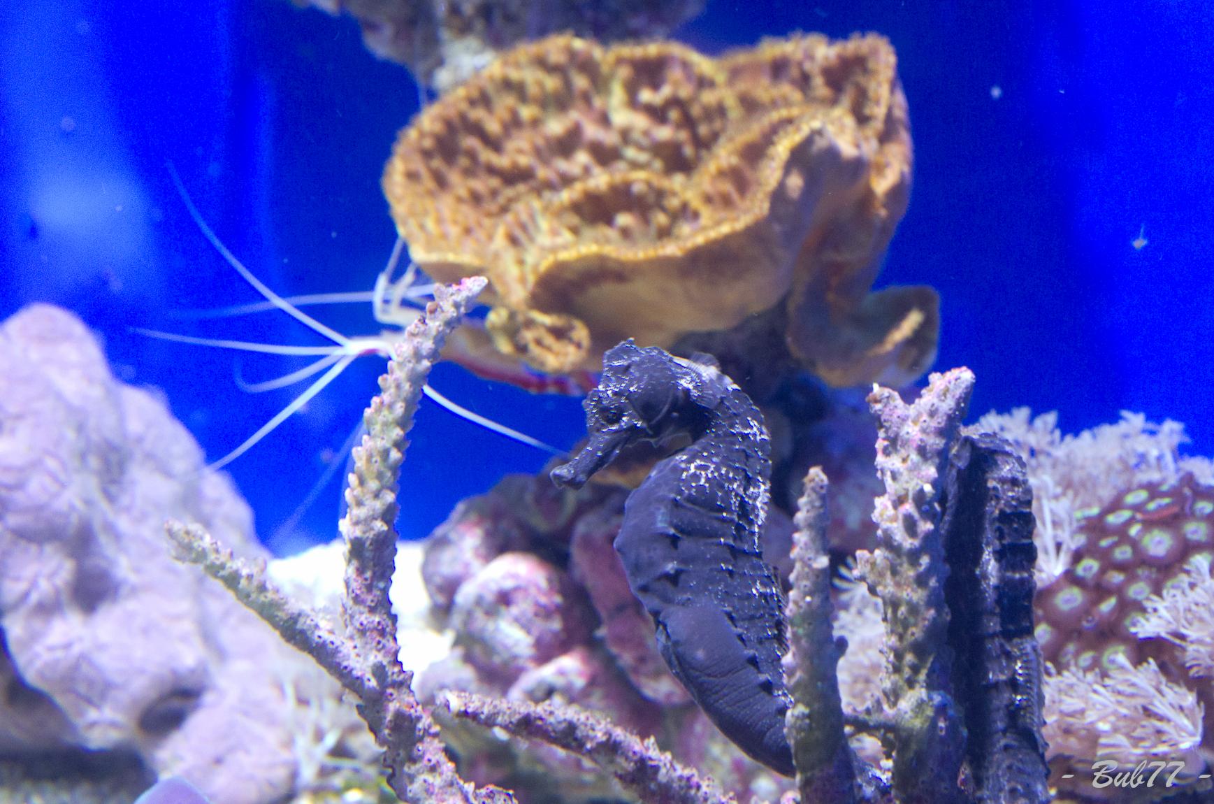 Aquarium de Monaco Imgp811761
