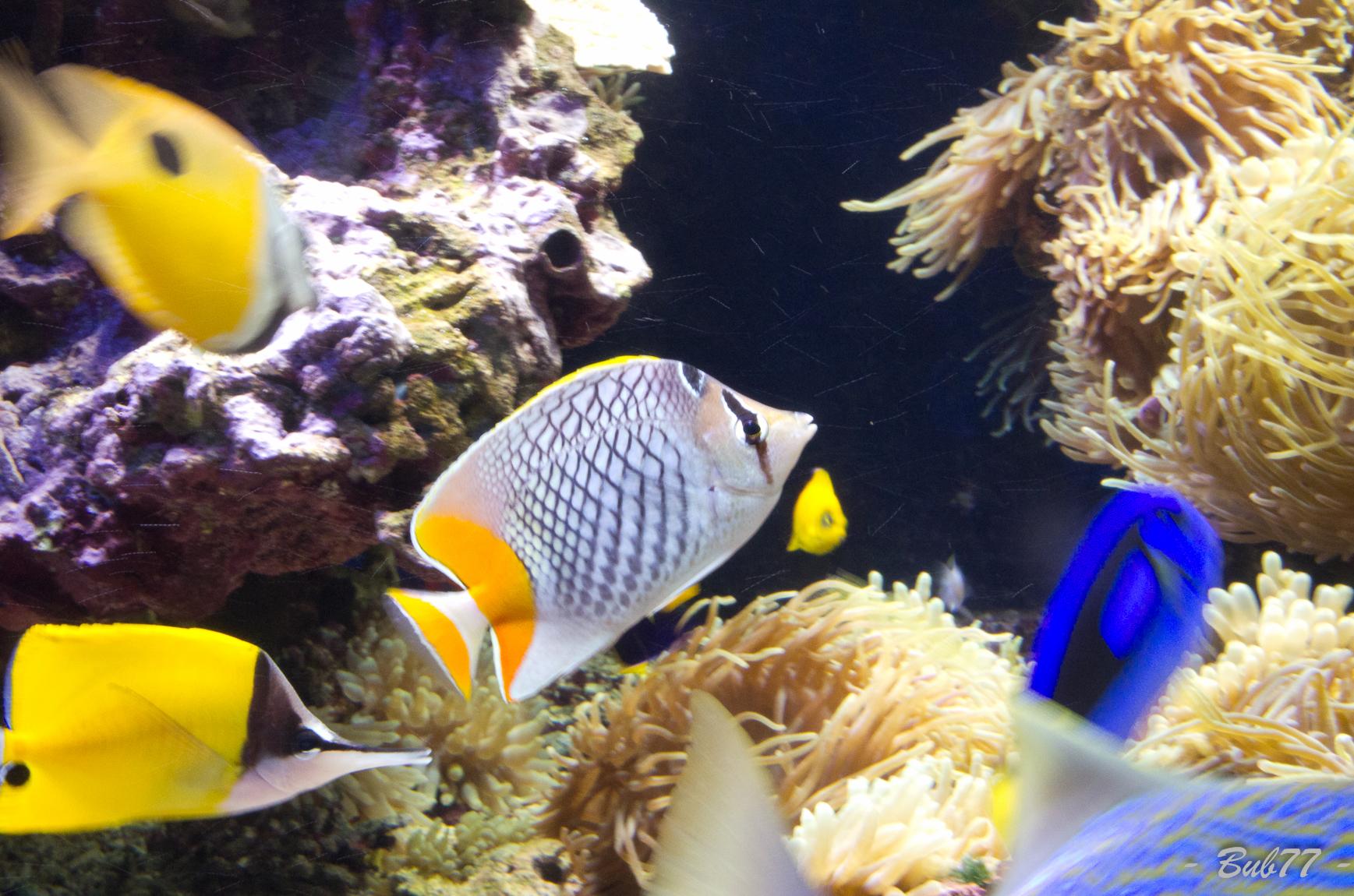 Aquarium de Monaco Imgp809850
