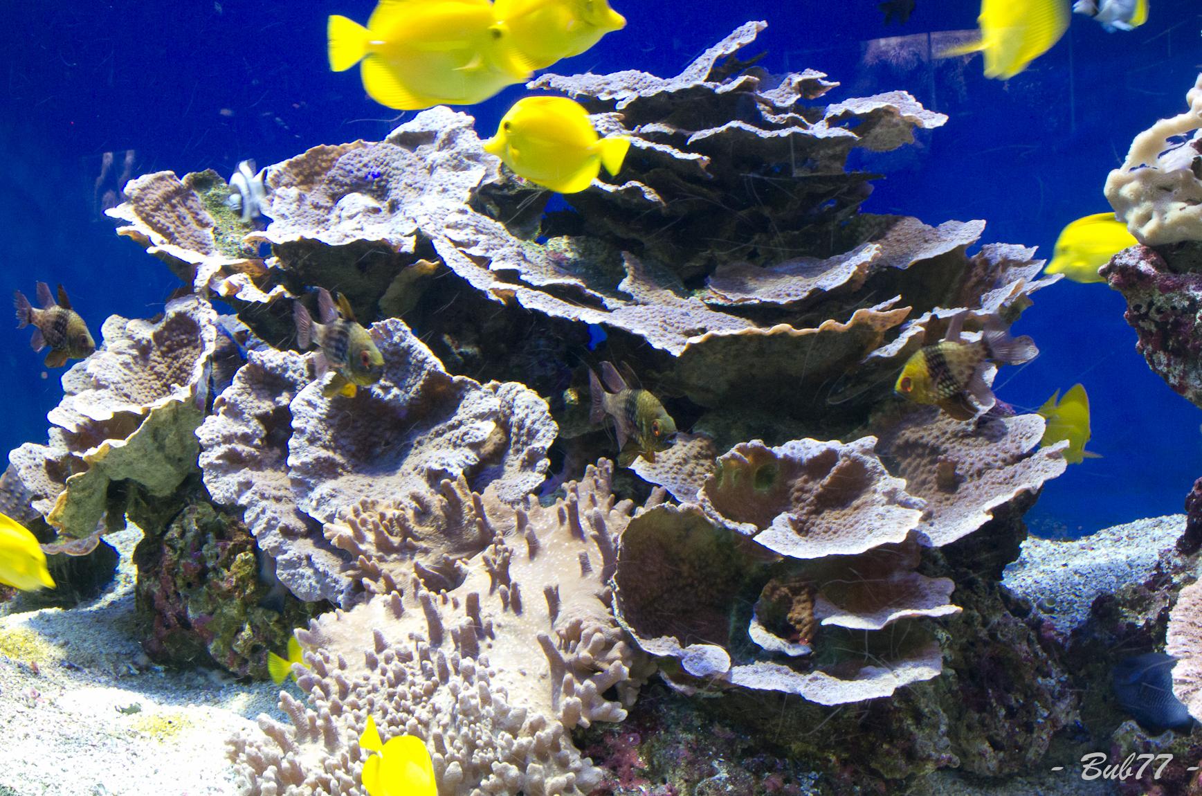 Aquarium de Monaco Imgp810152