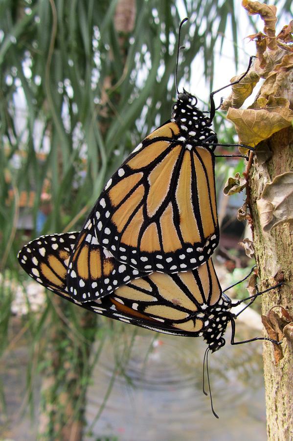 Sortie au Jardin des Papillons de Grevenmacher le 01 Avril 2012 : Les photos Img047001042012sx230hs