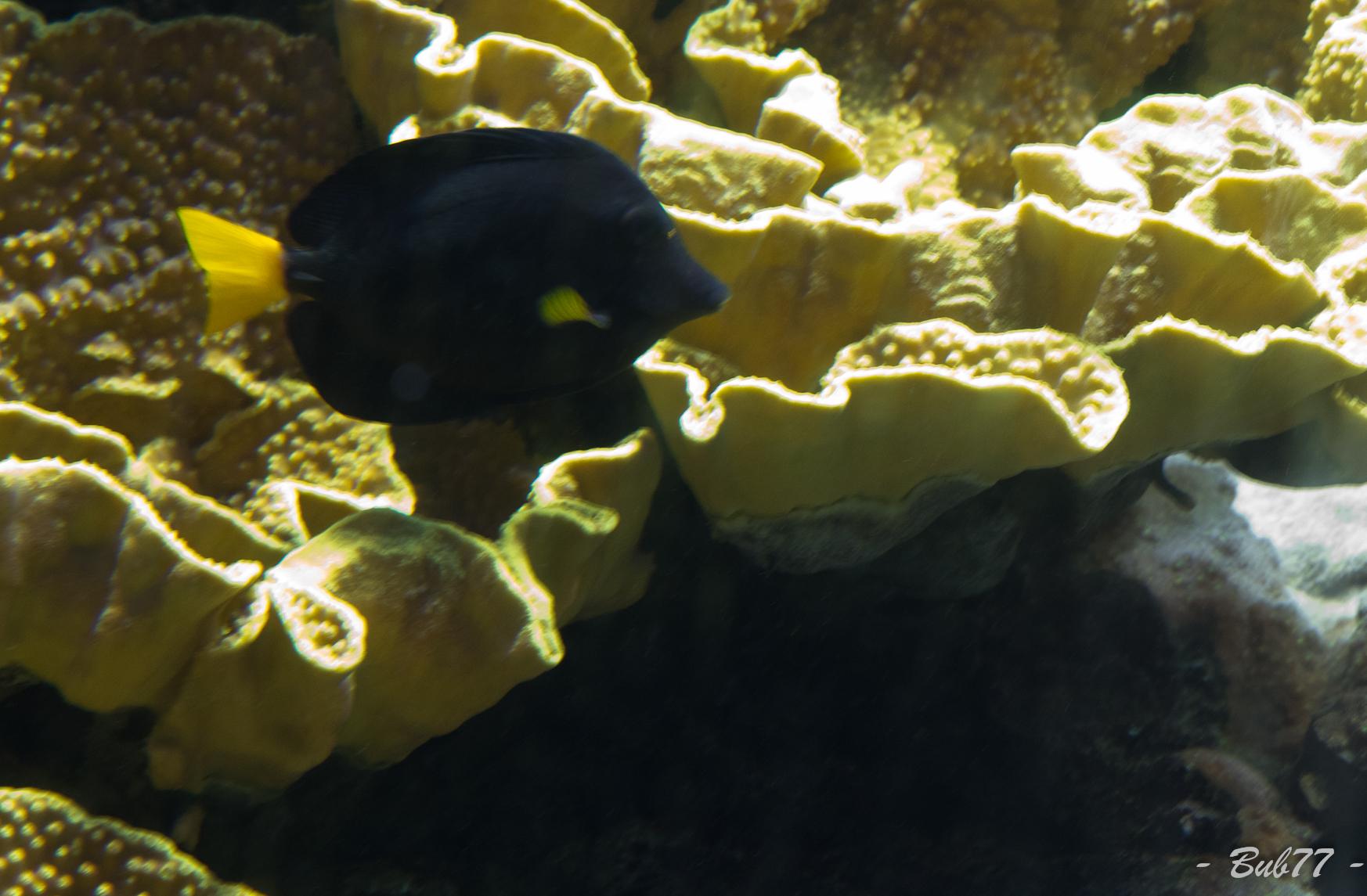 Aquarium de Monaco Imgp806728