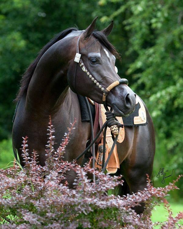 Najlepši konji na svetu - Page 5 T9yY2y