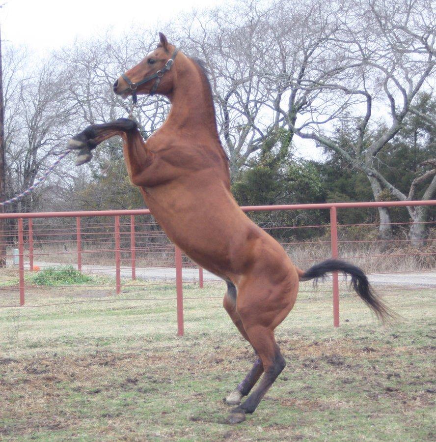 Najlepši konji na svetu - Page 5 Ob5ke6