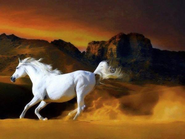 Najlepši konji na svetu - Page 5 IRL7Ae