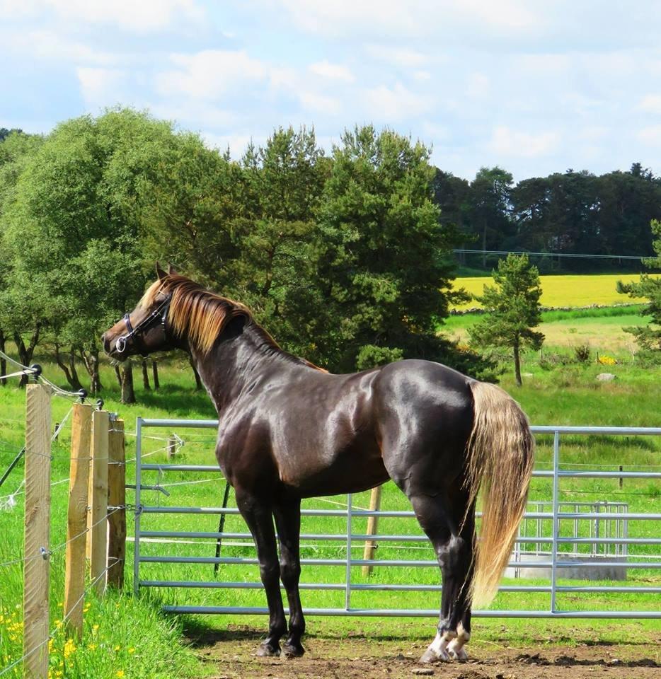Najlepši konji na svetu - Page 5 PyRojI