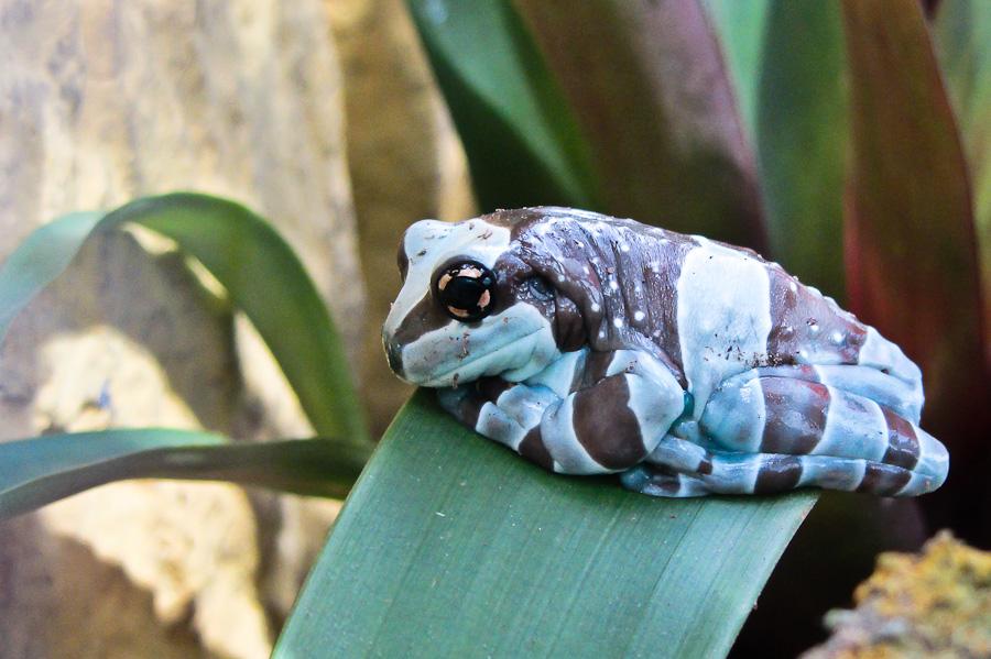 Sortie au Jardin des Papillons de Grevenmacher le 01 Avril 2012 : Les photos Img048501042012sx230hs