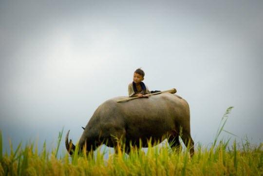 Việt Nam đẹp ngỡ ngàng trên National Geographic Images6277993
