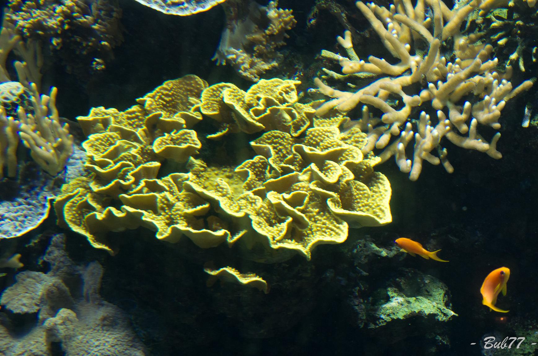 Aquarium de Monaco Imgp806223