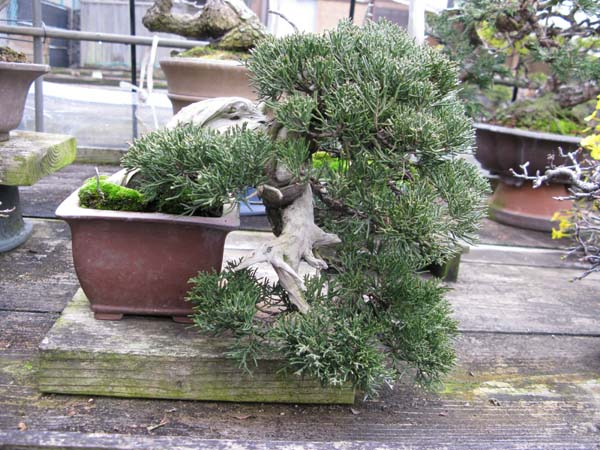 Centro bonsai tenerife en JAPÓN 2009-2010, IIIª Parte 103f