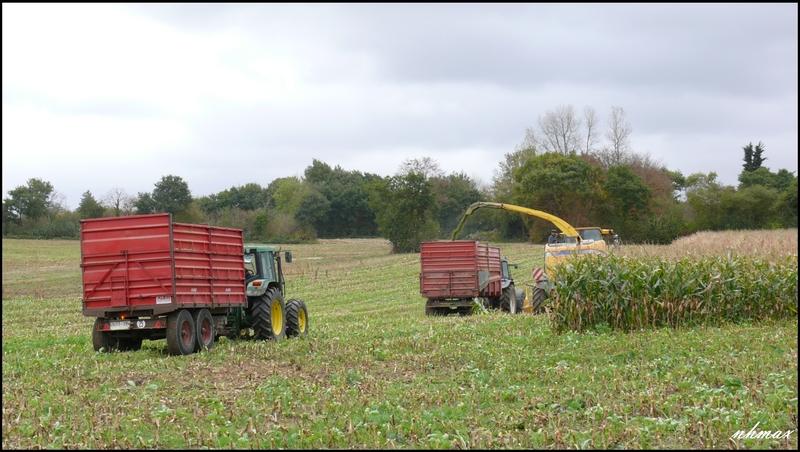 Ensilage de maïs 2011 P1100654k