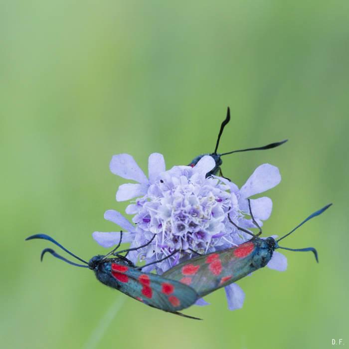 Insectes (bis) ou l'habitat collectif 3wka