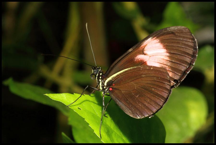 Votre plus belle photo de Macro 2011 0391900