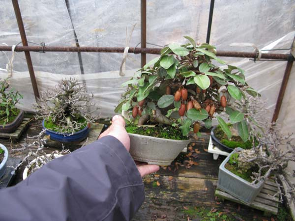 Centro bonsai tenerife en JAPÓN 2009-2010, IIIª Parte 123gl