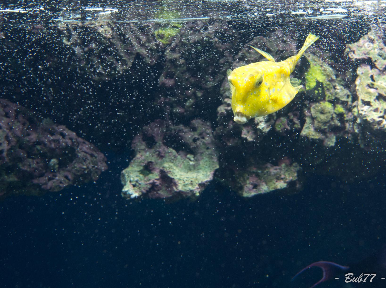 Aquarium de Monaco Imgp80384