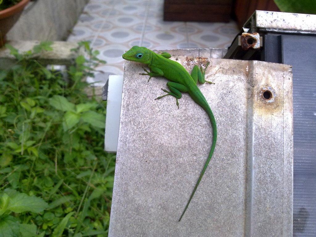 De retour de Guadeloupe, j'ai vu plein de belles choses, même des montres... 06112010715