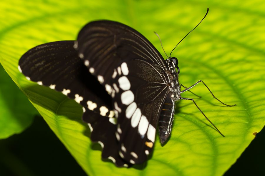 Sortie au Jardin des Papillons de Grevenmacher le 03 Avril 2011 : Les photos - Page 2 Mg3513201104037d