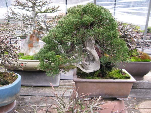 Centro bonsai tenerife en JAPÓN 2009-2010, IIIª Parte 106ra