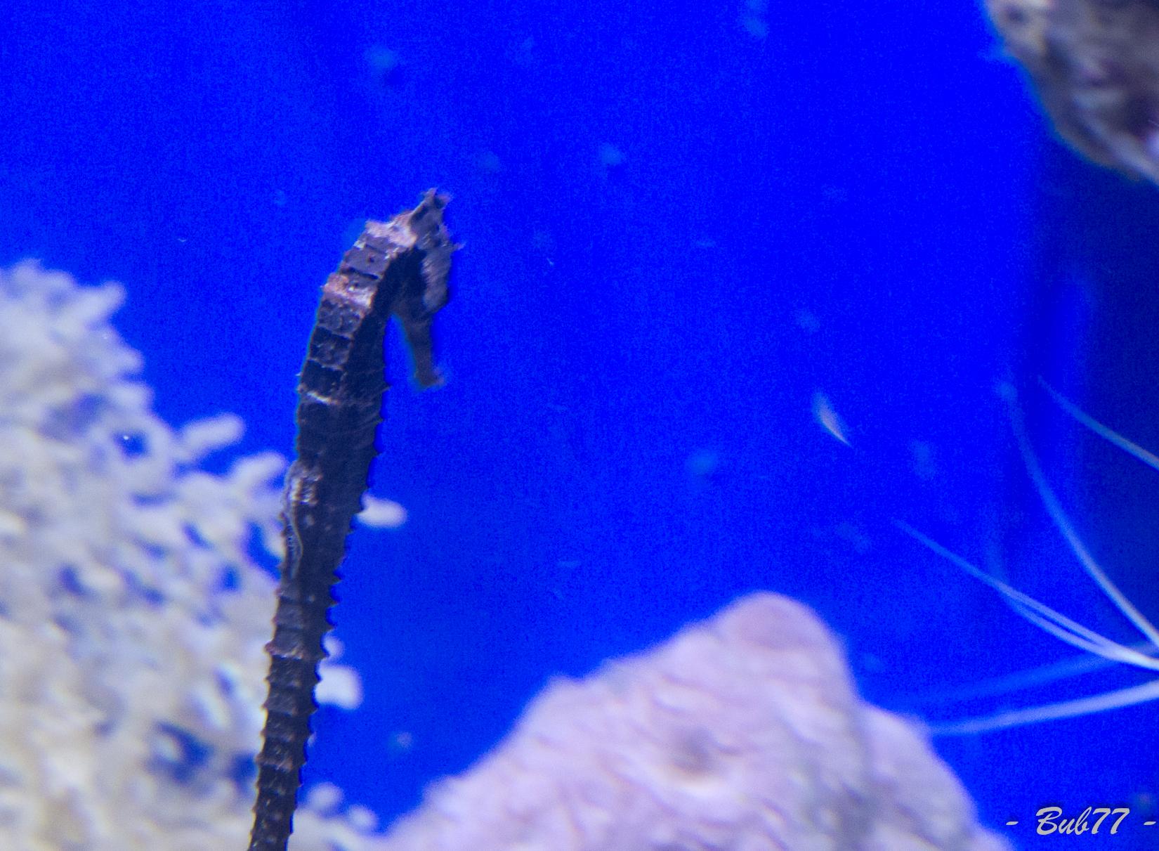 Aquarium de Monaco Imgp811559