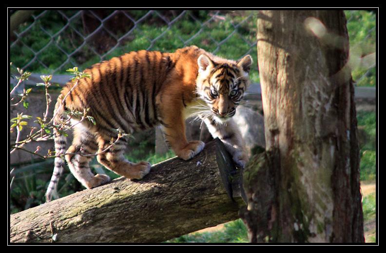 Zoo de Doué la Fontaine Img6734l