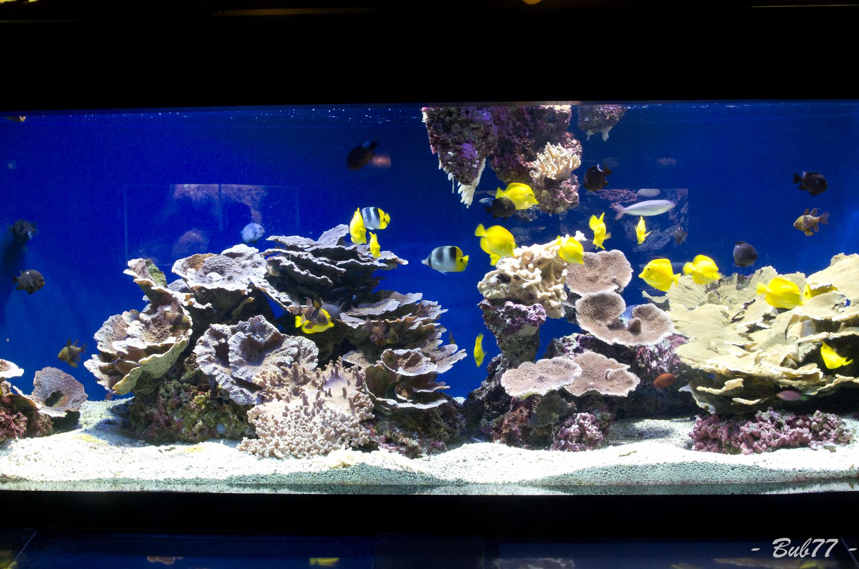 Aquarium de Monaco Imgp809951