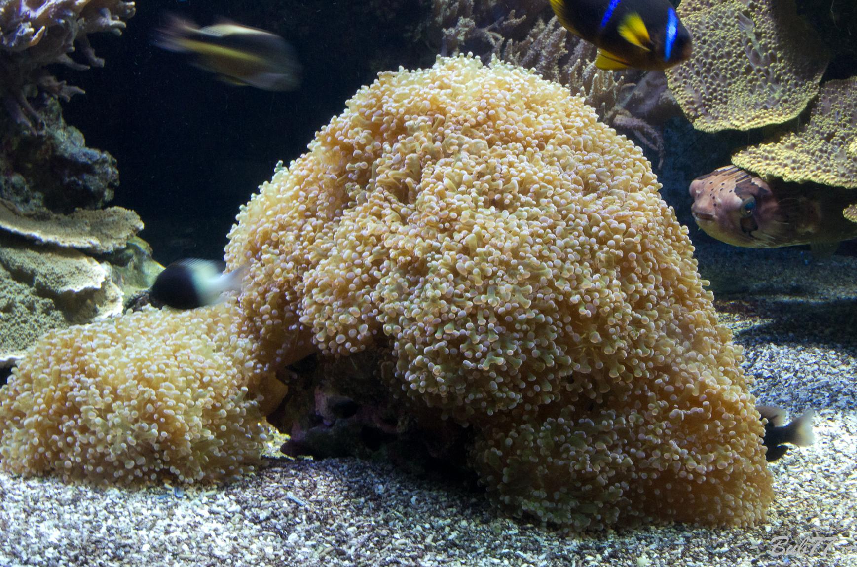 Aquarium de Monaco Imgp807939