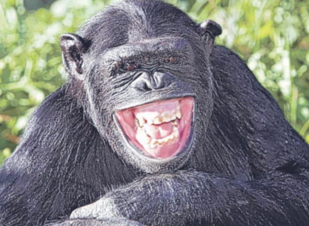 Các kiểu cười của ... động vật Images56659012