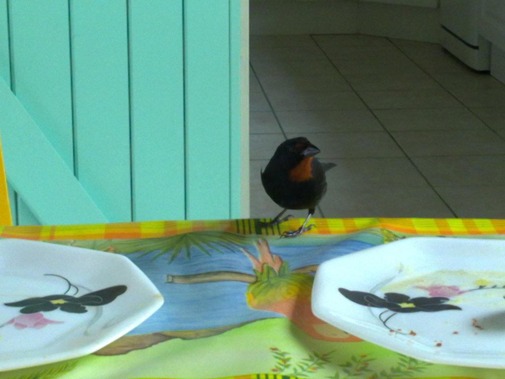 De retour de Guadeloupe, j'ai vu plein de belles choses, même des montres... 18112010912