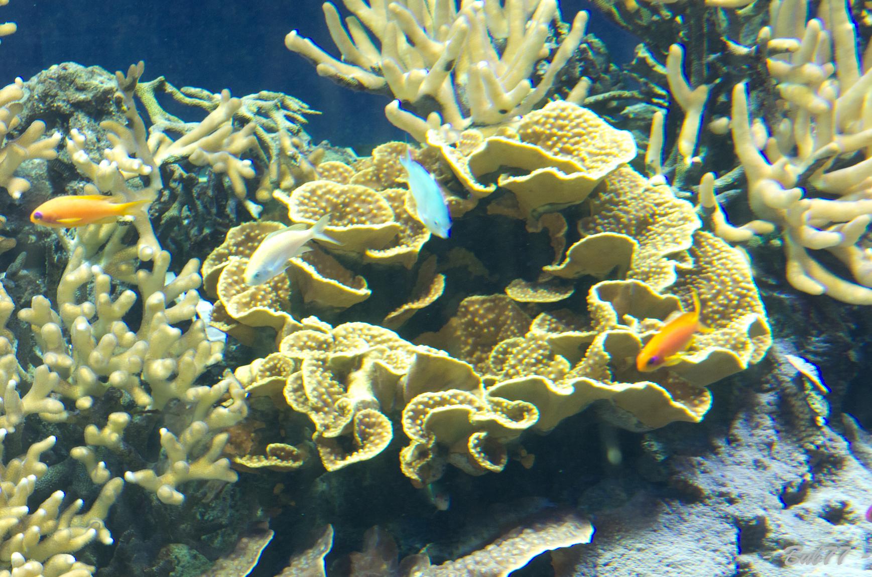 Aquarium de Monaco Imgp806021
