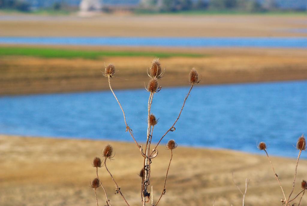 Rencontre Lac du Der 9 et 10 octobre 2010 (Sortie annuelle) - II - Page 50 Lacdudersortiepentaxfore
