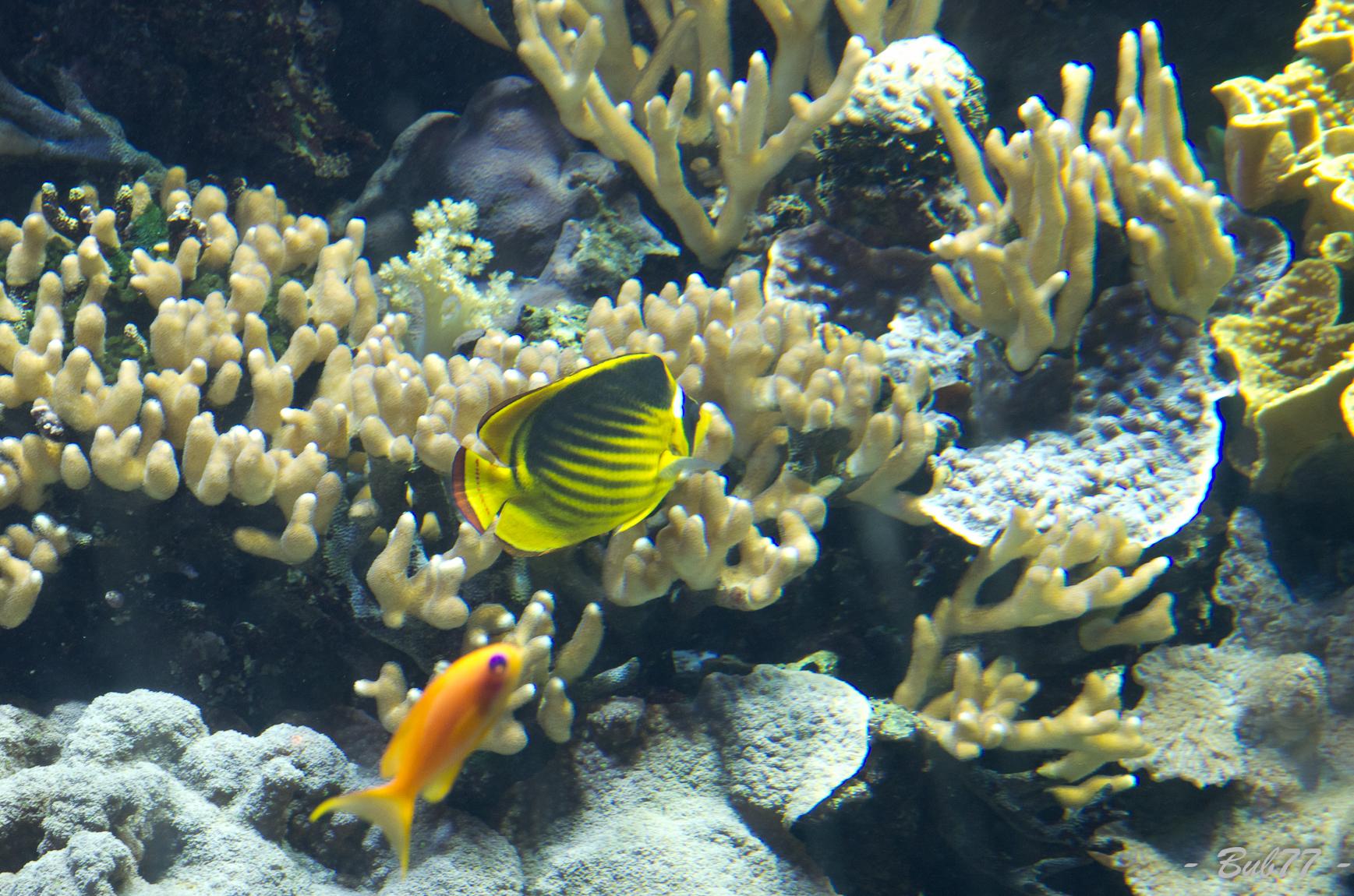Aquarium de Monaco Imgp806829