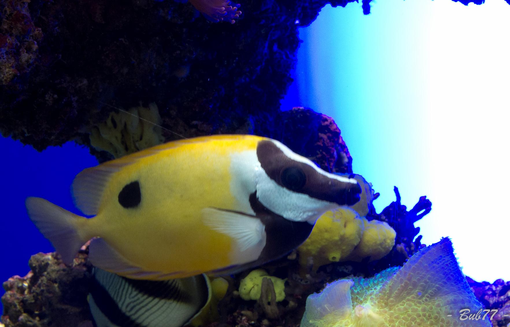 Aquarium de Monaco Imgp807131