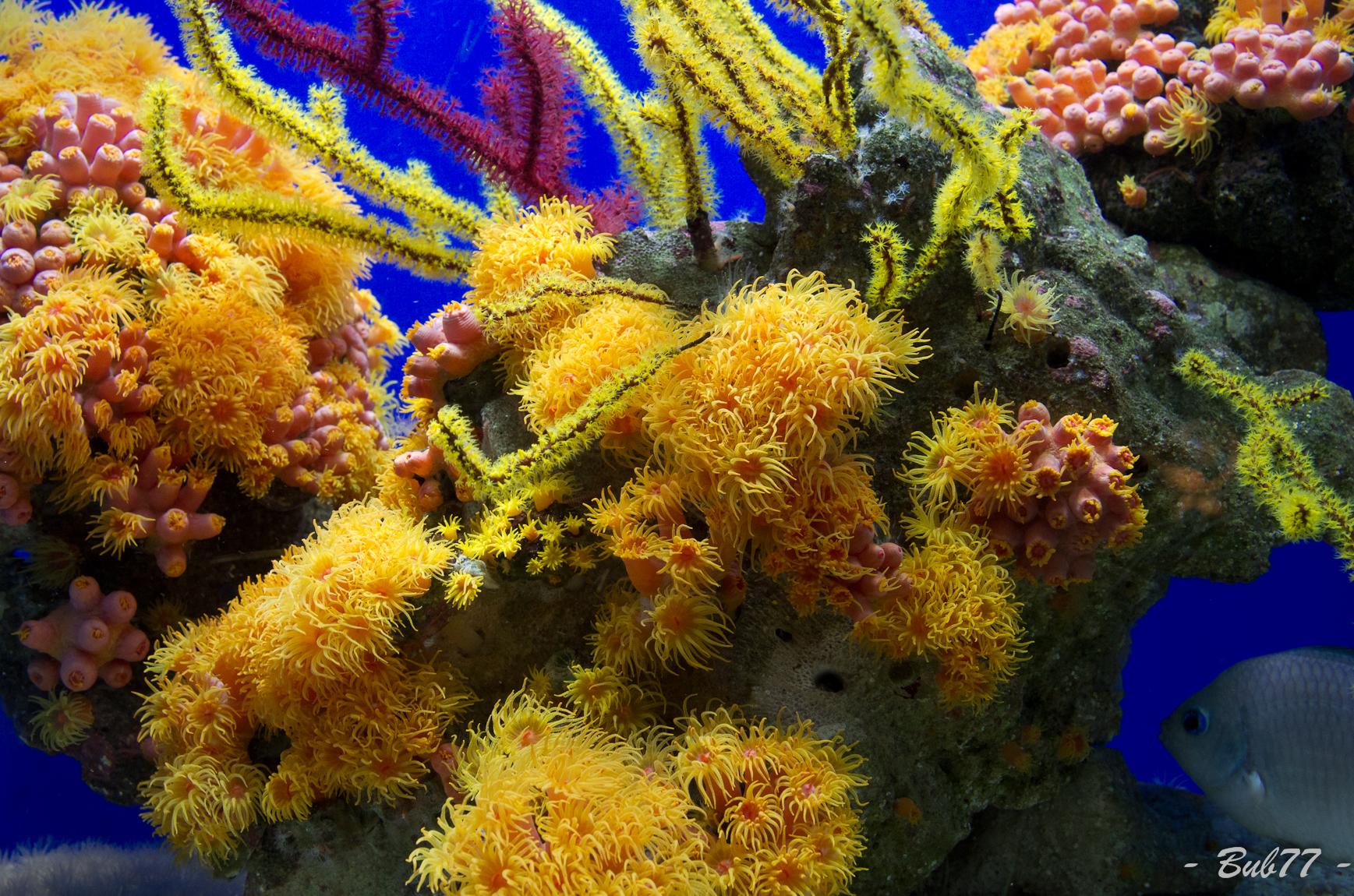 Aquarium de Monaco Imgp807030
