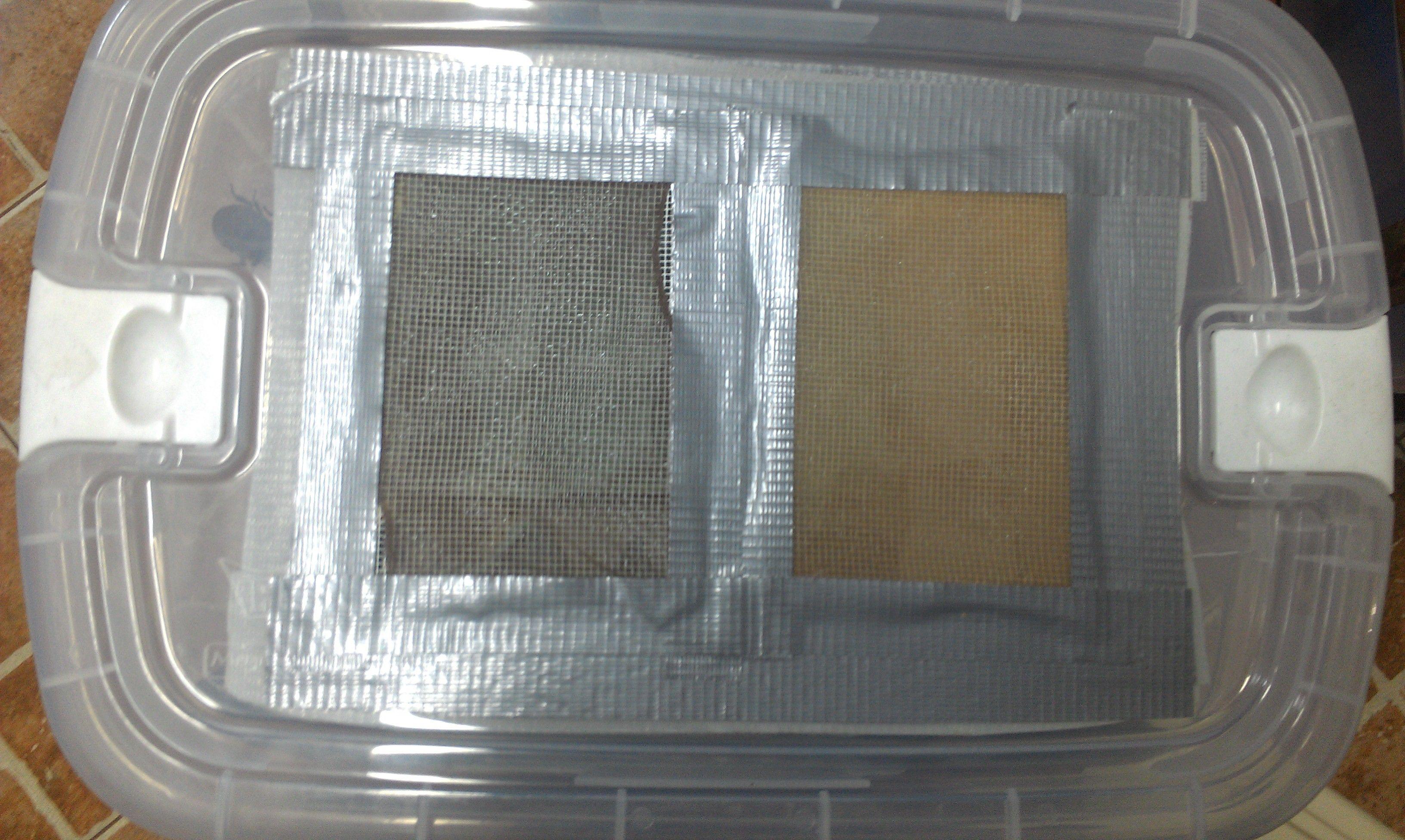 Cría y reproducción de cucarachas.....si!! cucarachas!!!! 966b