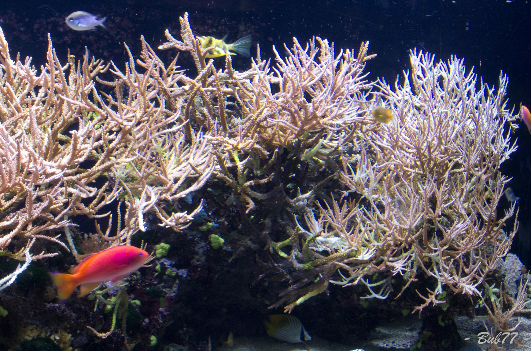 Aquarium de Monaco Imgp808746