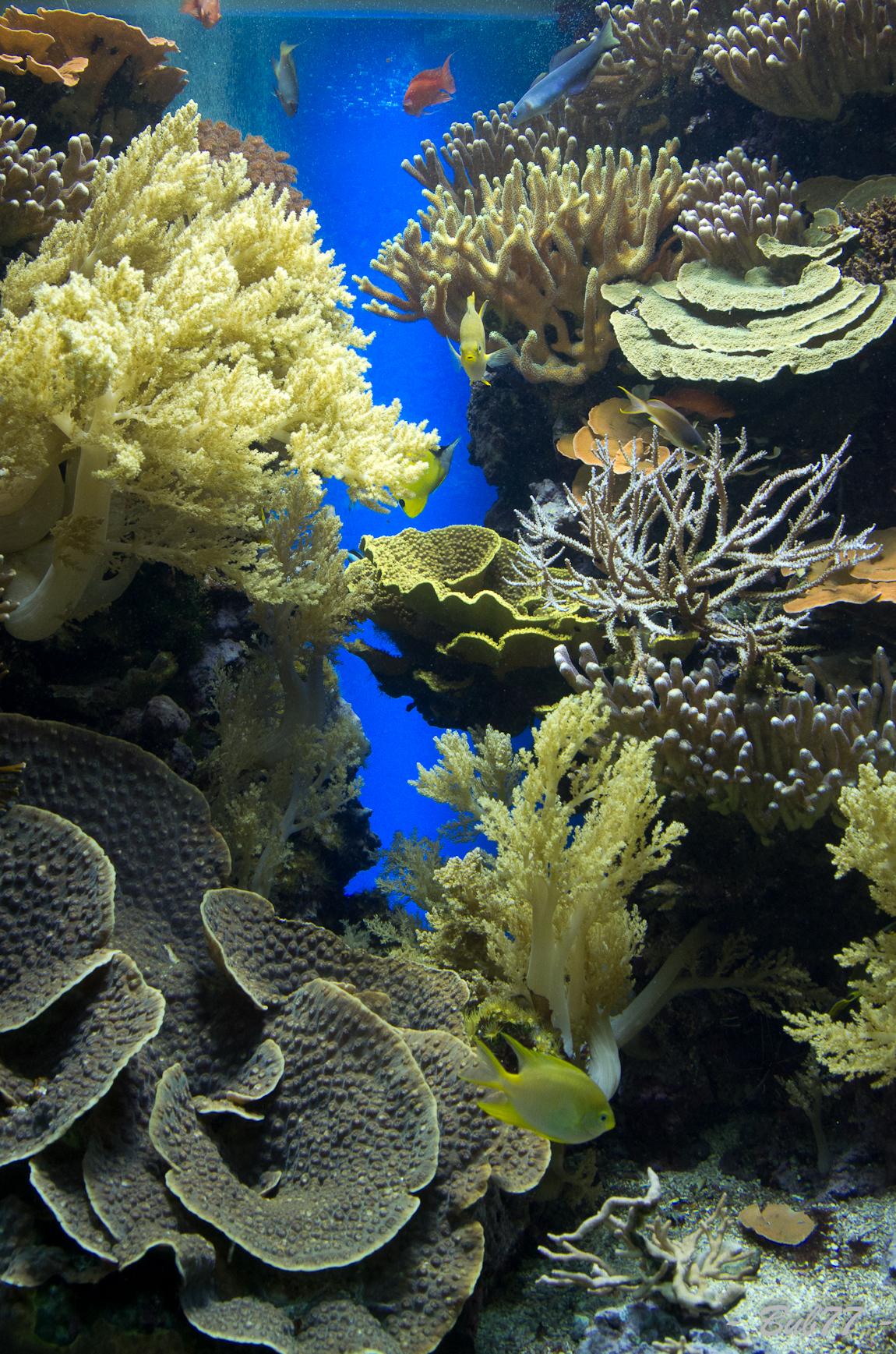 Aquarium de Monaco Imgp807232