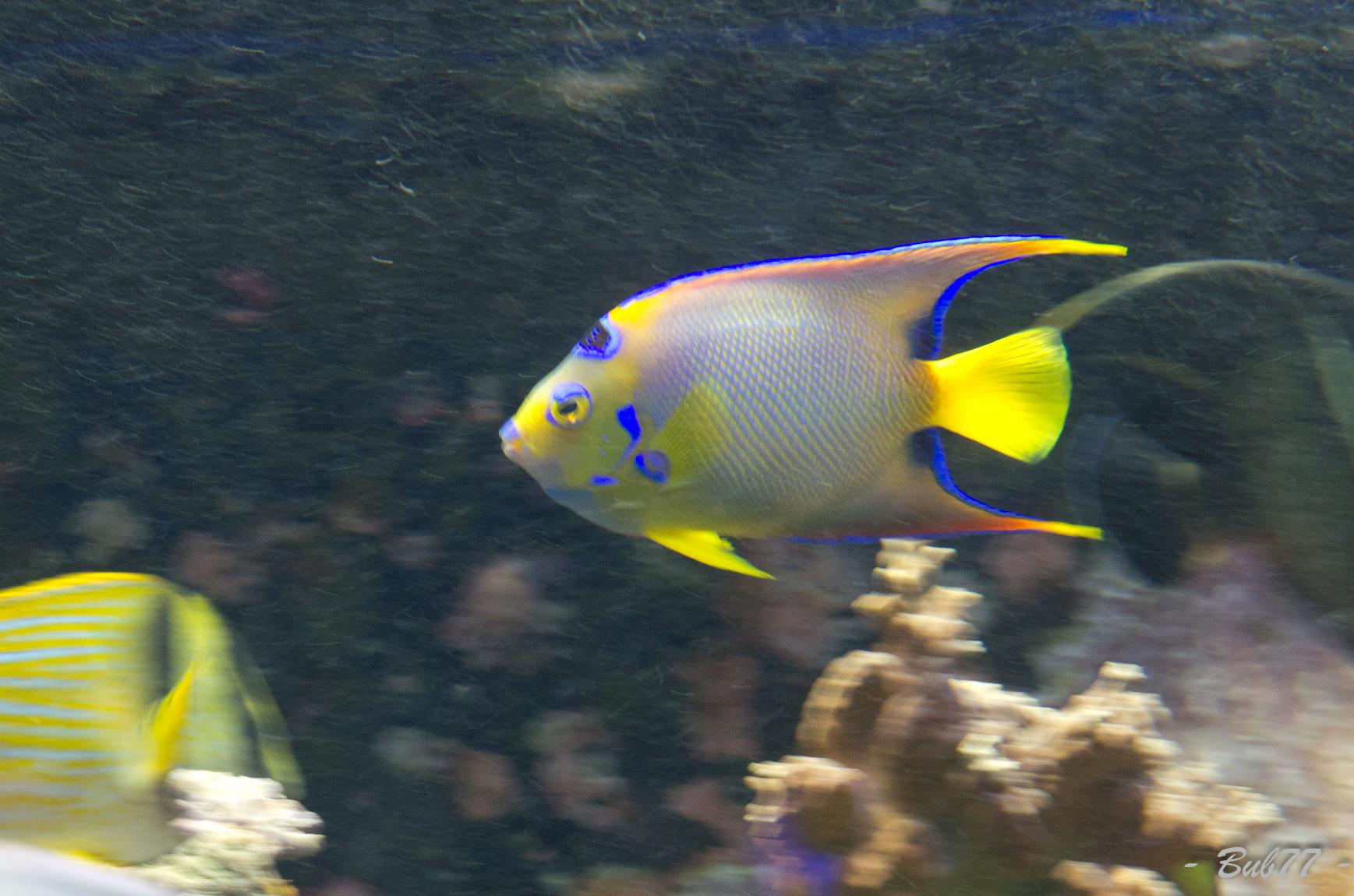 Aquarium de Monaco Imgp810655