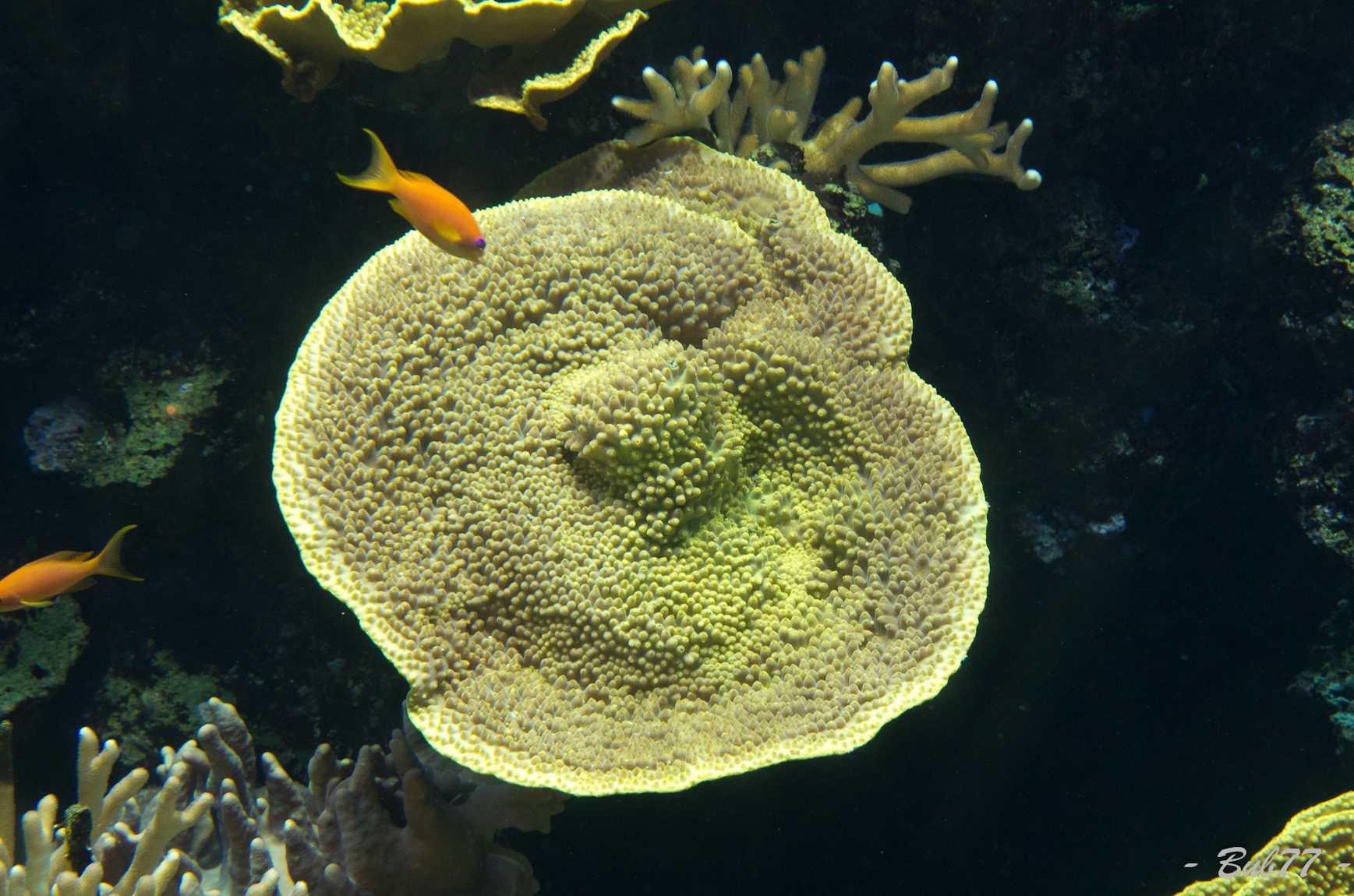 Aquarium de Monaco Imgp806526