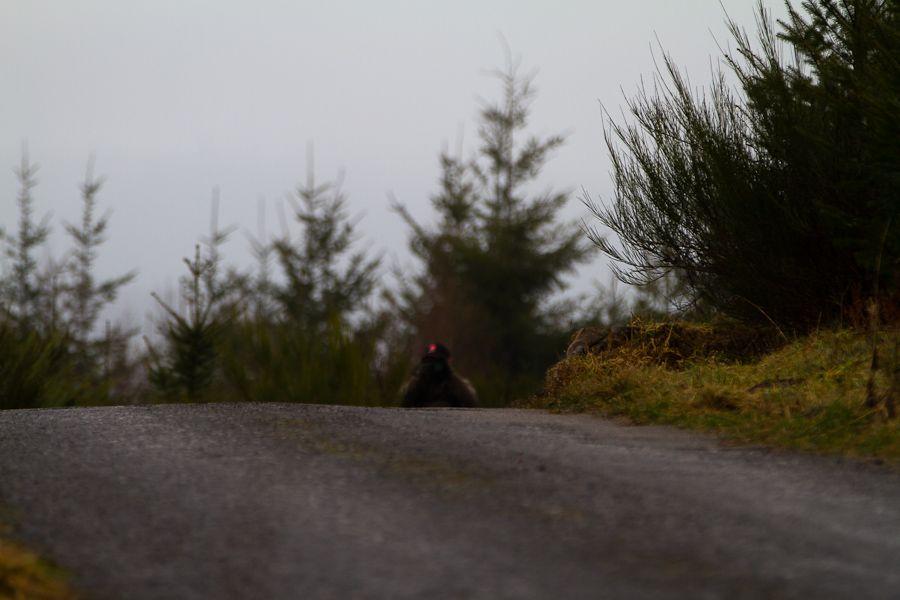 Sortie Legend Boucles de Spa 2012 - 18 février 2012 : Les photos d'ambiances Mg5158201202187d