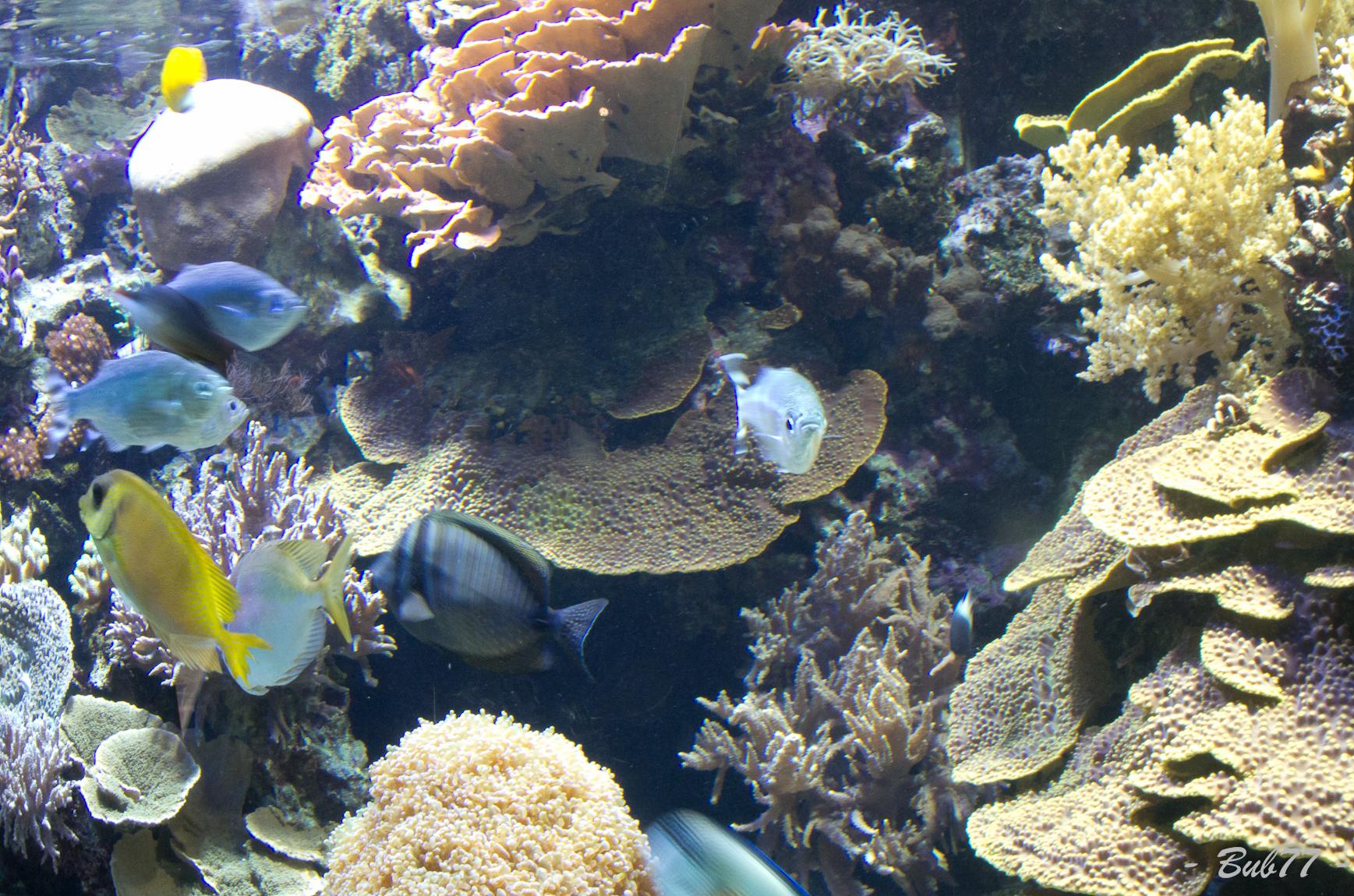 Aquarium de Monaco Imgp808242
