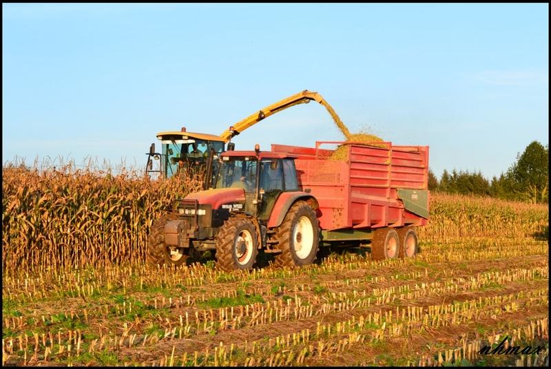 Ensilage de maïs 2011 Dsc0075yg