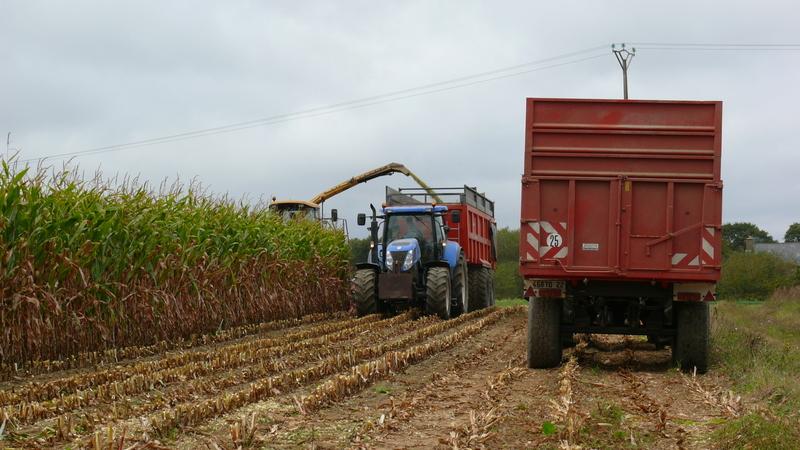 Ensilage de maïs 2011 P1100762w