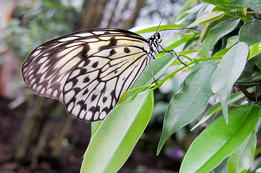 Sortie au Jardin des Papillons de Grevenmacher le 01 Avril 2012 : Les photos Img046101042012sx230hs