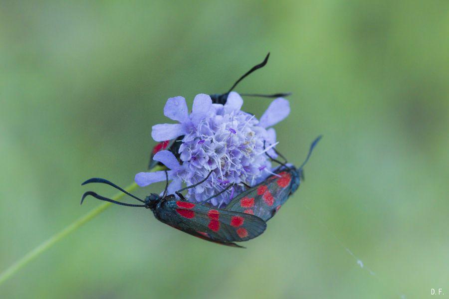 Insectes (bis) ou l'habitat collectif P708