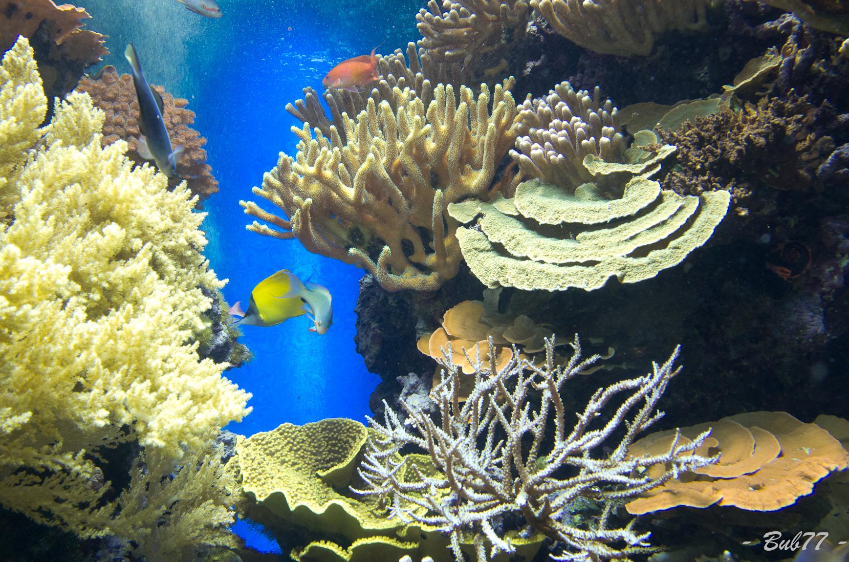 Aquarium de Monaco Imgp807333