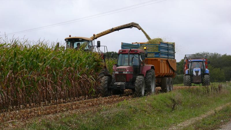 Ensilage de maïs 2011 P1100759b