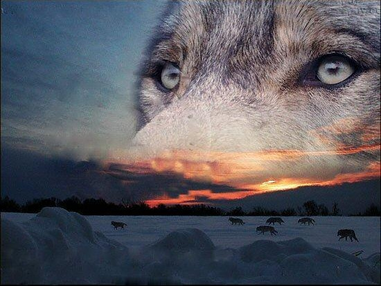 La reliance. Message du Déva des Loups Espritduloup