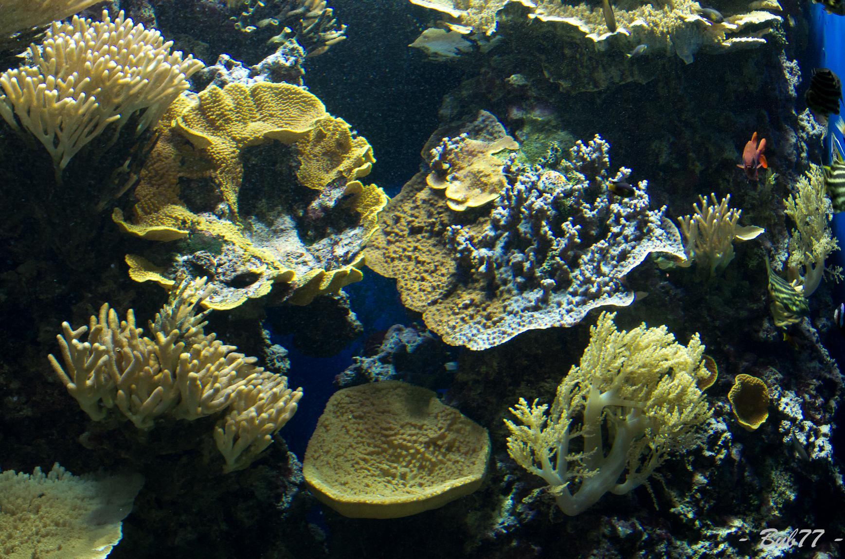 Aquarium de Monaco Imgp80406