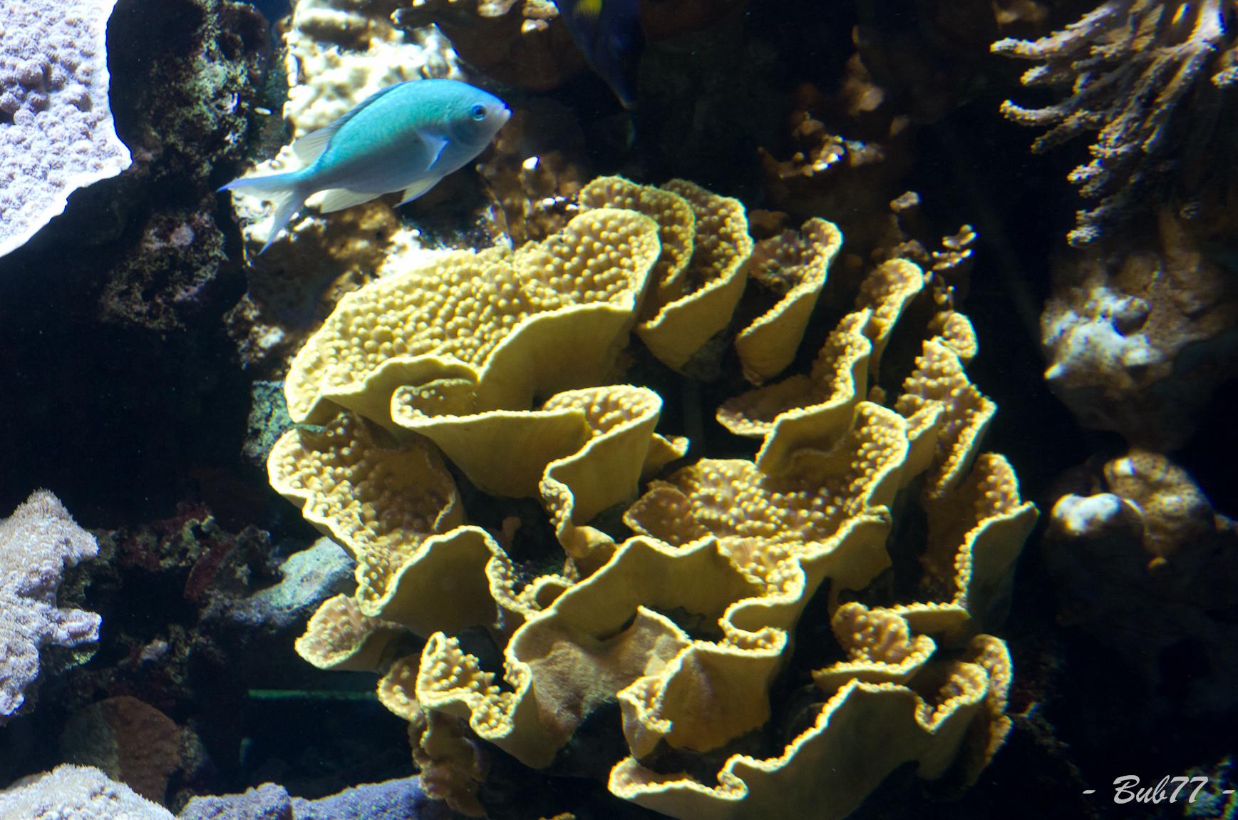 Aquarium de Monaco Imgp805920