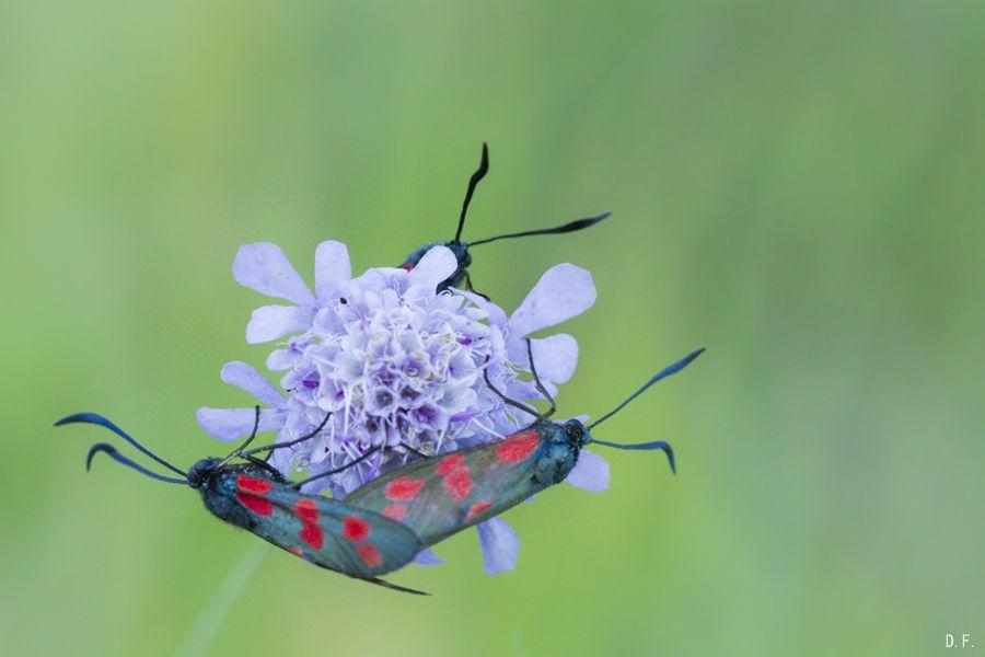 Insectes (bis) ou l'habitat collectif Guui