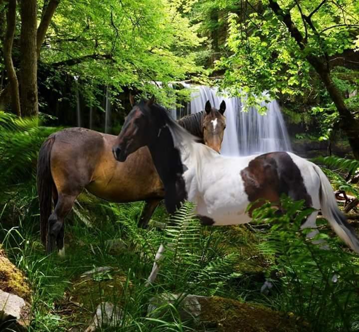 Najlepši konji na svetu - Page 4 ONcFmB